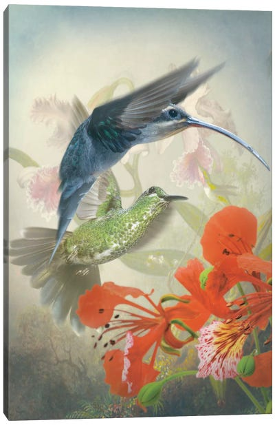 Hummingbird Cycle II Canvas Art Print