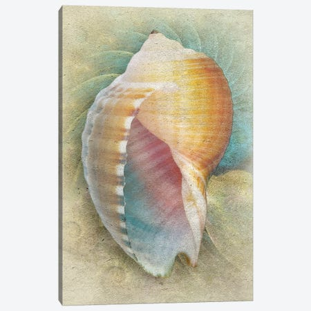 Aquatica III Canvas Print #ZIK8} by Steve Hunziker Canvas Wall Art