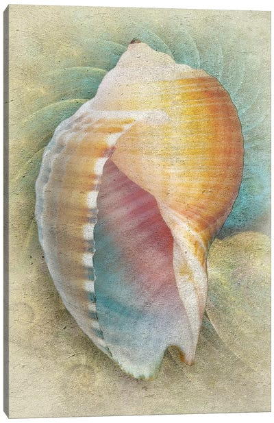 Aquatica III Canvas Art Print