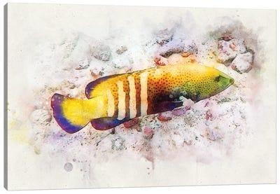 Peacock Grouper Watercolor Canvas Art Print