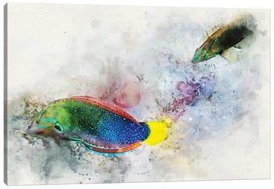 Yellowtail Wrasse Watercolor Canvas Art Print