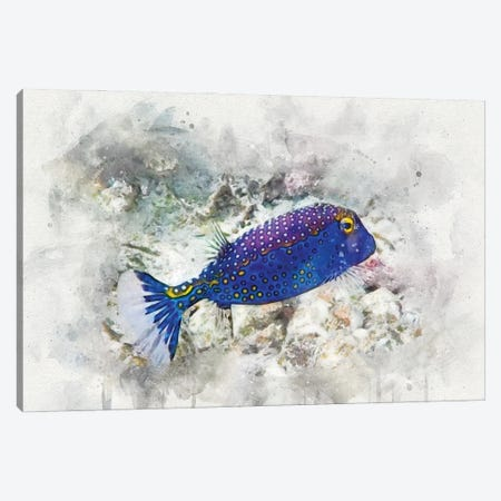 Spotted Boxfish Canvas Print #ZLW16} by Christine Zalewski Canvas Art Print