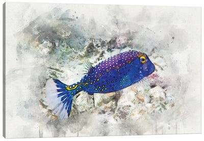 Spotted Boxfish Canvas Art Print