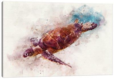 Green Sea Turtle I Canvas Art Print