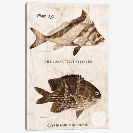 Vintage Fish I Canvas Print #ZLW21} by Christine Zalewski Art Print