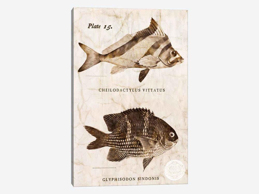 Vintage Fish I by Christine Zalewski 1-piece Canvas Artwork