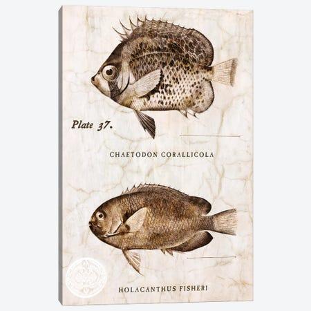 Vintage Fish II Canvas Print #ZLW22} by Christine Zalewski Canvas Art Print