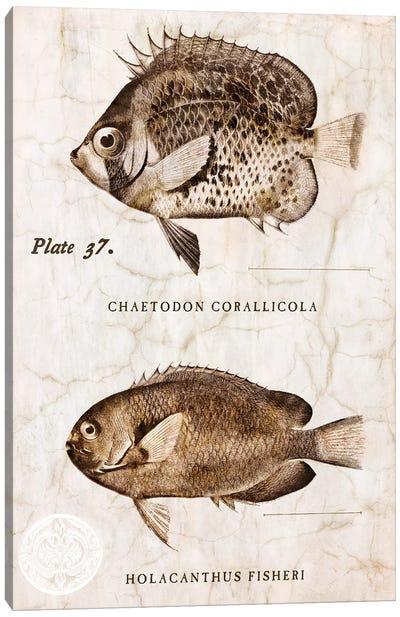 Vintage Fish II Canvas Art Print