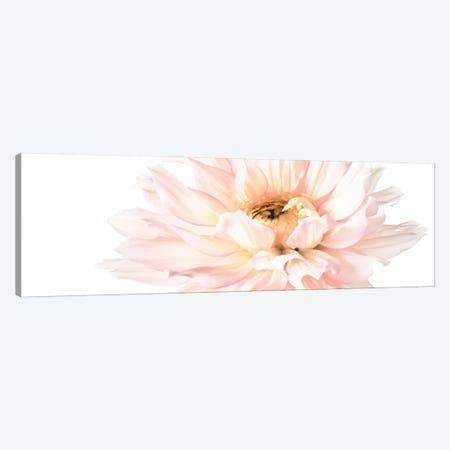 Blush Pink Dahlia I Canvas Print #ZLW29} by Christine Zalewski Canvas Print