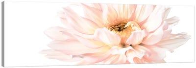 Blush Pink Dahlia I Canvas Art Print