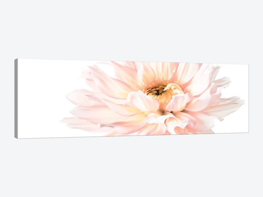 Blush Pink Dahlia I by Christine Zalewski 1-piece Canvas Wall Art