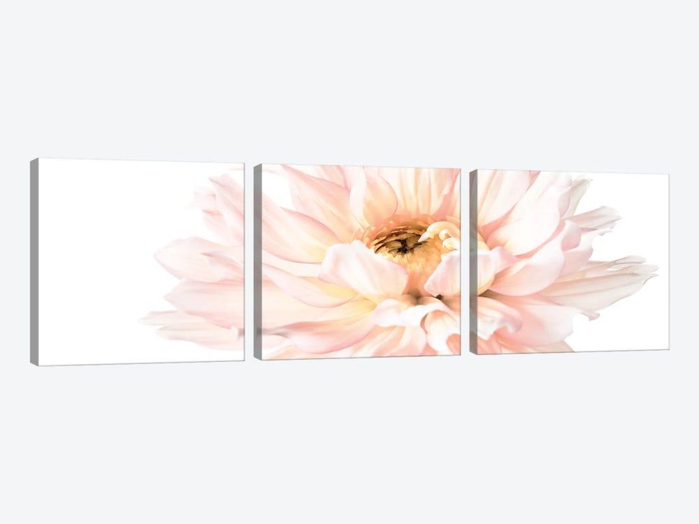 Blush Pink Dahlia I by Christine Zalewski 3-piece Canvas Wall Art
