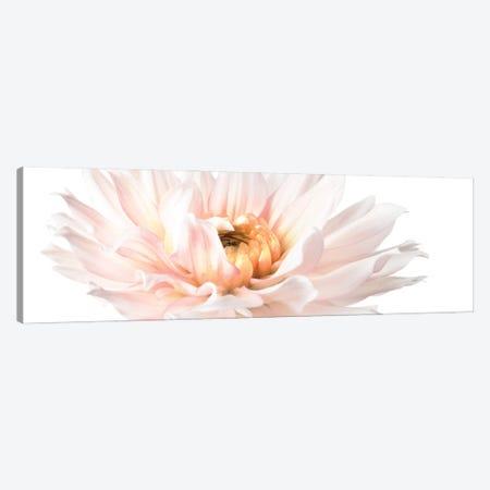 Blush Pink Dahlia II Canvas Print #ZLW30} by Christine Zalewski Canvas Art