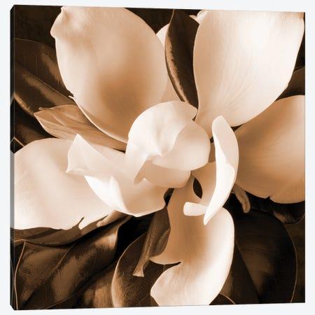 Sepia Magnolia I Canvas Print #ZLW31} by Christine Zalewski Canvas Art
