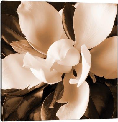 Sepia Magnolia I Canvas Art Print