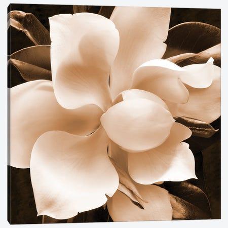 Sepia Magnolia II Canvas Print #ZLW32} by Christine Zalewski Canvas Artwork