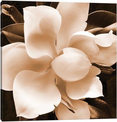 Sepia Magnolia II Canvas Art Print