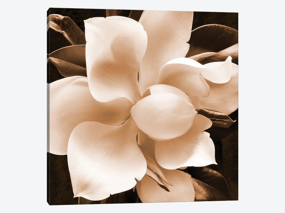 Sepia Magnolia II by Christine Zalewski 1-piece Canvas Art