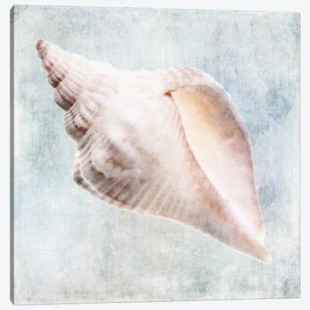Coastal Blue Cream Murex Shell Canvas Print #ZLW36} by Christine Zalewski Art Print