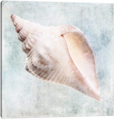 Coastal Blue Cream Murex Shell Canvas Art Print
