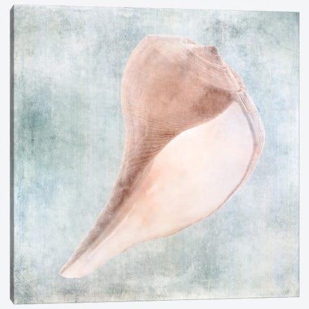 Coastal Blue Cream Sea Shell Canvas Print #ZLW37} by Christine Zalewski Canvas Print