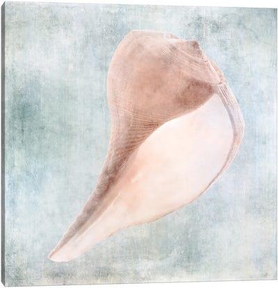 Coastal Blue Cream Sea Shell Canvas Art Print