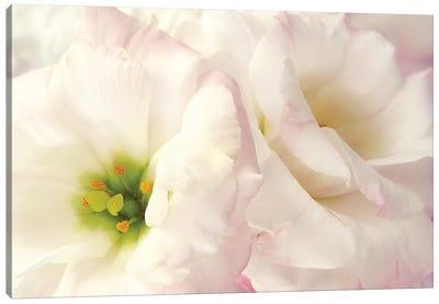Pink Blossoms I Canvas Art Print