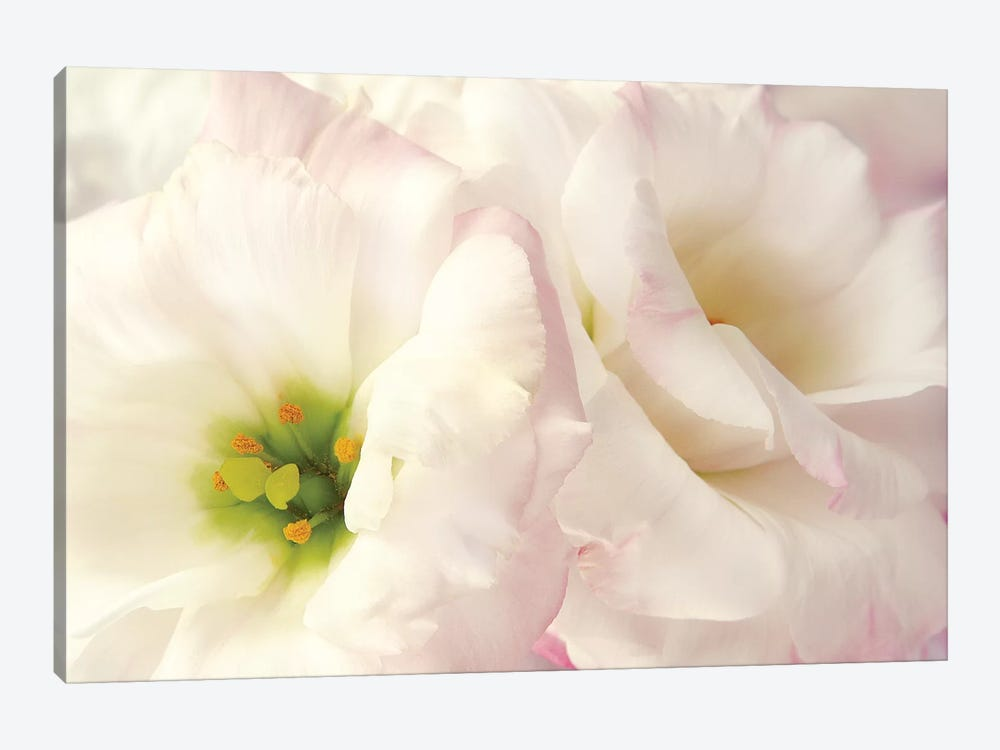 Pink Blossoms I by Christine Zalewski 1-piece Canvas Art