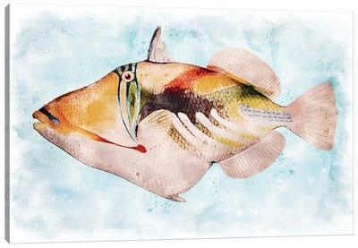 Hawaiian Picasso Triggerfish Watercolor Canvas Art Print
