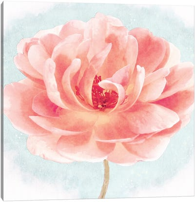 Heirloom Garden Rose In Coral Pink And Light Blue Watercolor Ii Canvas Art Print