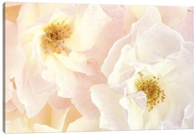 Pink Blossoms II Canvas Art Print