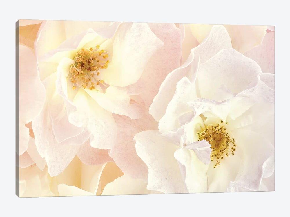Pink Blossoms II by Christine Zalewski 1-piece Canvas Art Print