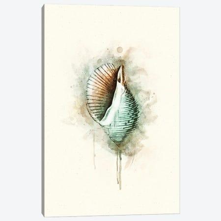 Tropical Coastal Shell Watercolor G Teal Canvas Print #ZLW56} by Christine Zalewski Art Print