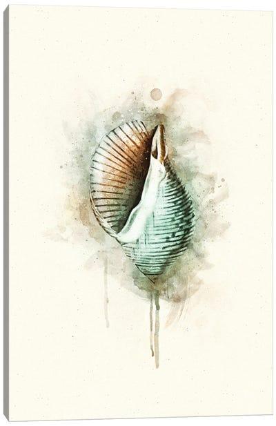 Tropical Coastal Shell Watercolor G Teal Canvas Art Print