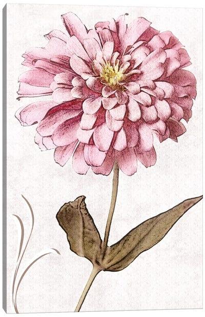 Pink Zinnia I Canvas Art Print