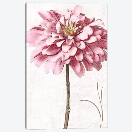 Pink Zinnia II Canvas Print #ZLW6} by Christine Zalewski Canvas Art Print