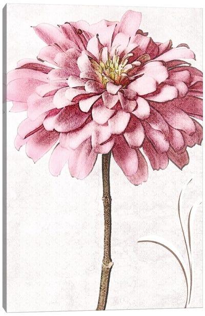 Pink Zinnia II Canvas Art Print