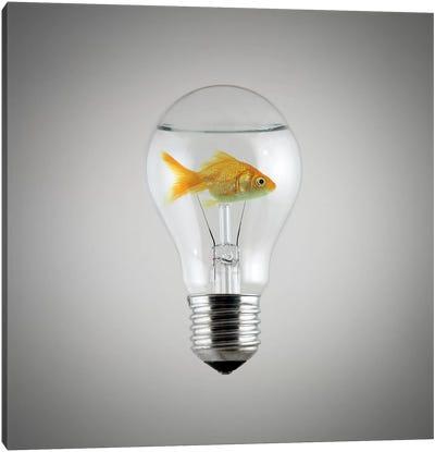 Fish Canvas Art Print