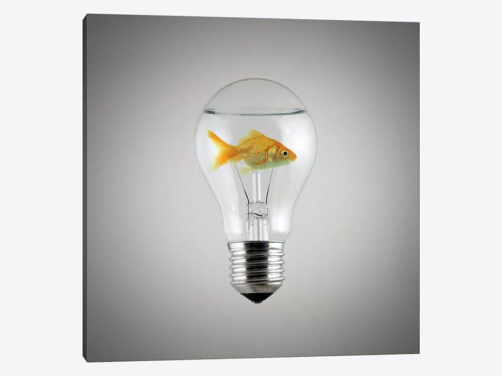Fish by Zoltan Toth 1-piece Art Print