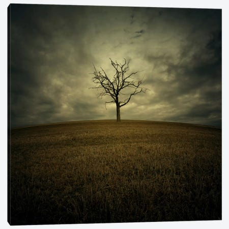 Tree Canvas Print #ZOL41} by Zoltan Toth Canvas Wall Art