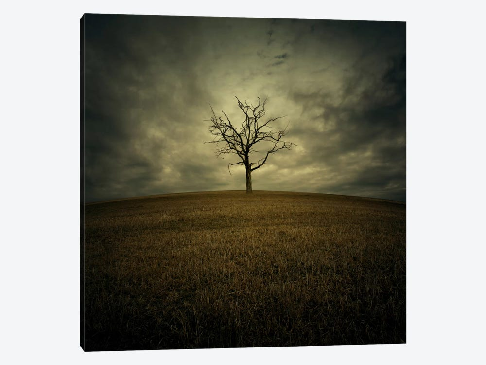 Tree by Zoltan Toth 1-piece Canvas Wall Art