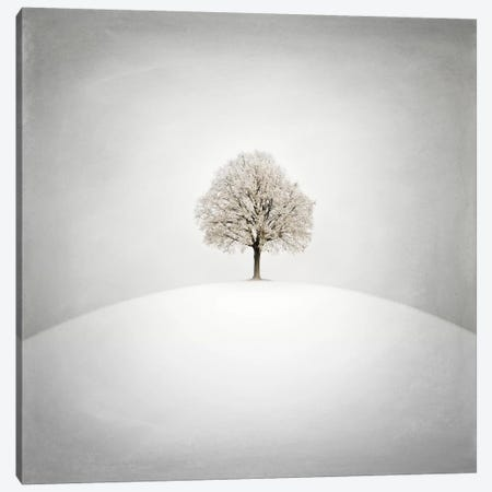 White Canvas Print #ZOL49} by Zoltan Toth Canvas Art