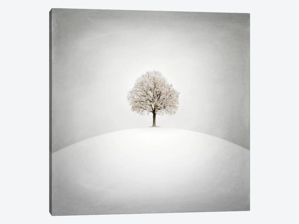 White by Zoltan Toth 1-piece Canvas Artwork