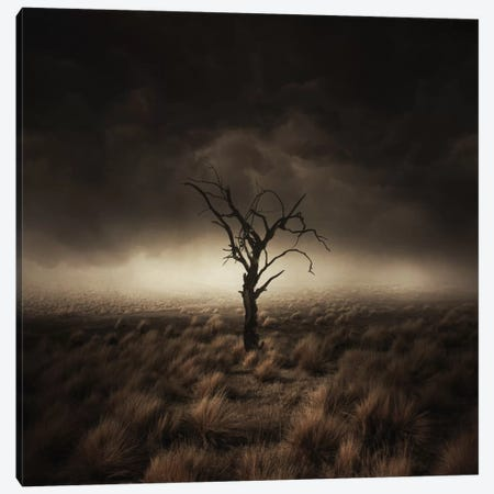 Alone Canvas Print #ZOL4} by Zoltan Toth Canvas Art