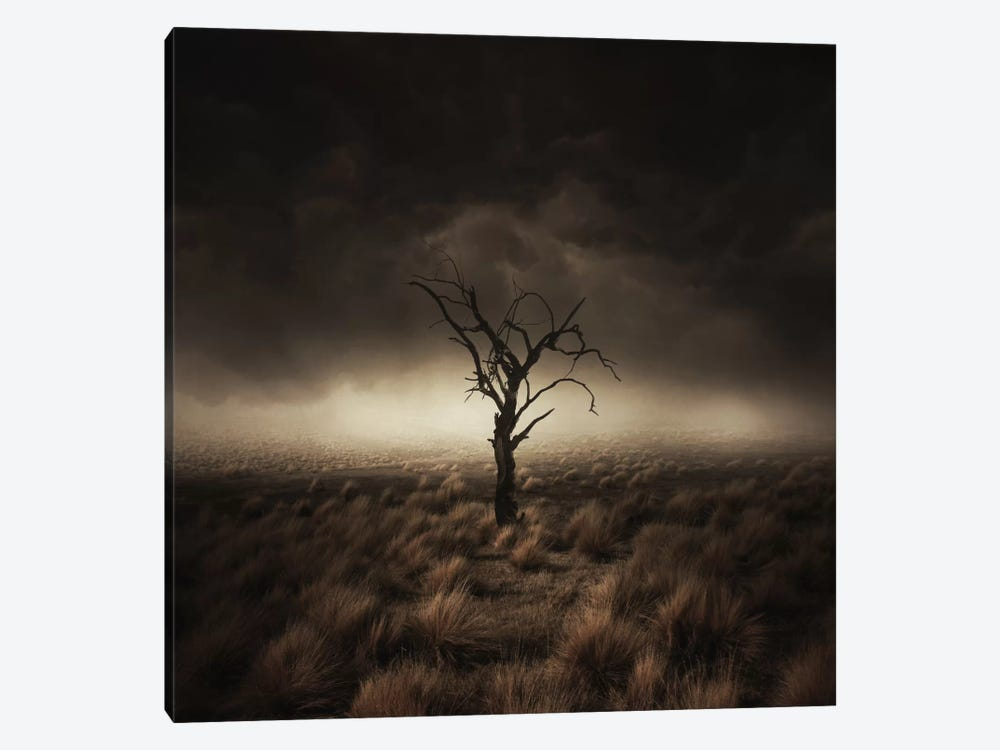 Alone by Zoltan Toth 1-piece Canvas Wall Art