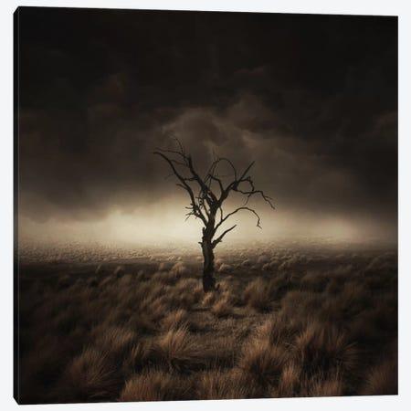 Alone Canvas Print #ZOL4} by Zoltan Toth Canvas Art