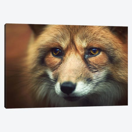 Fox Eyes Canvas Print #ZOL61} by Zoltan Toth Canvas Art