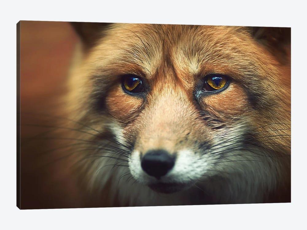 Fox Eyes by Zoltan Toth 1-piece Canvas Wall Art