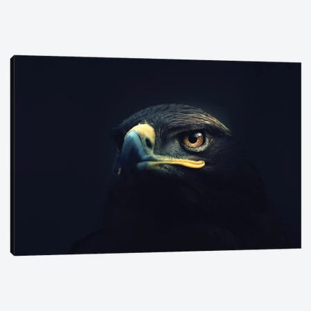 Hawk Eyes Canvas Print #ZOL62} by Zoltan Toth Canvas Artwork