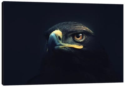 Hawk Eyes Canvas Art Print